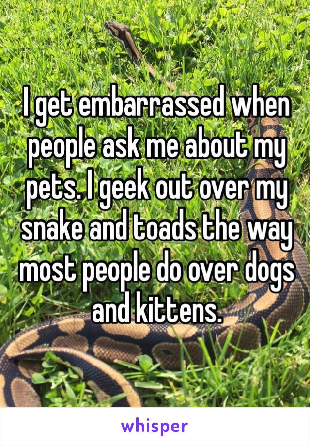 I get embarrassed when people ask me about my pets. I geek out over my snake and toads the way most people do over dogs and kittens.