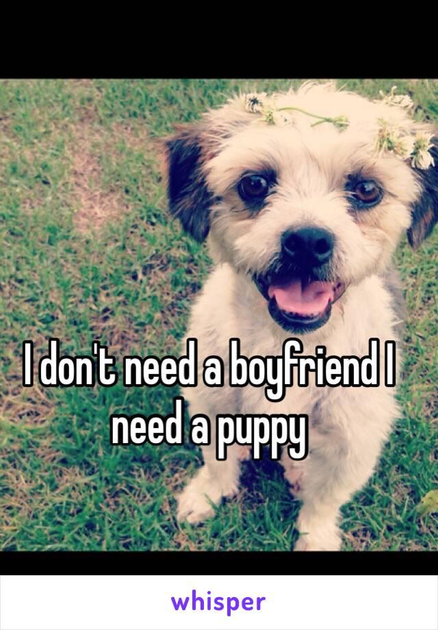 I don't need a boyfriend I need a puppy