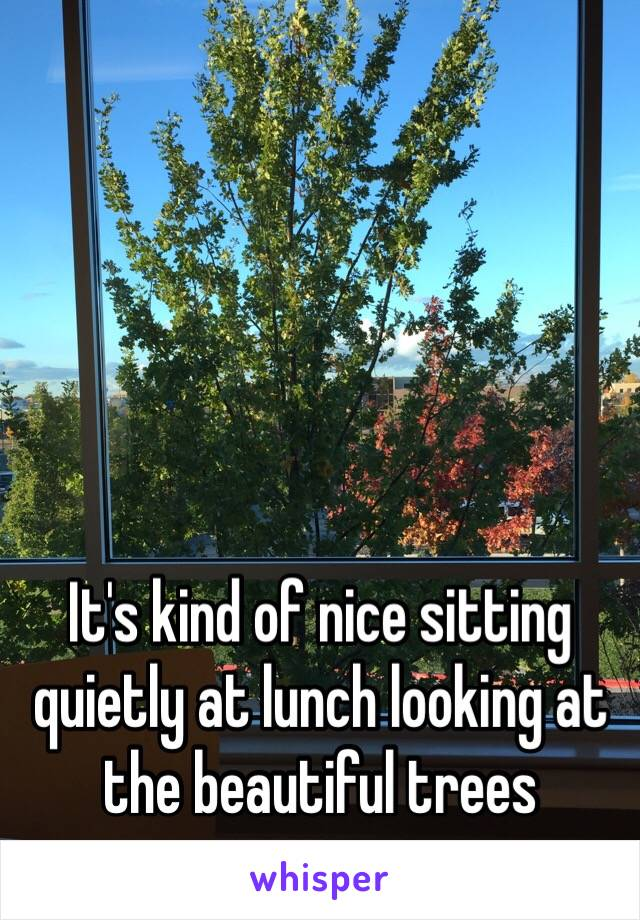 It's kind of nice sitting quietly at lunch looking at the beautiful trees