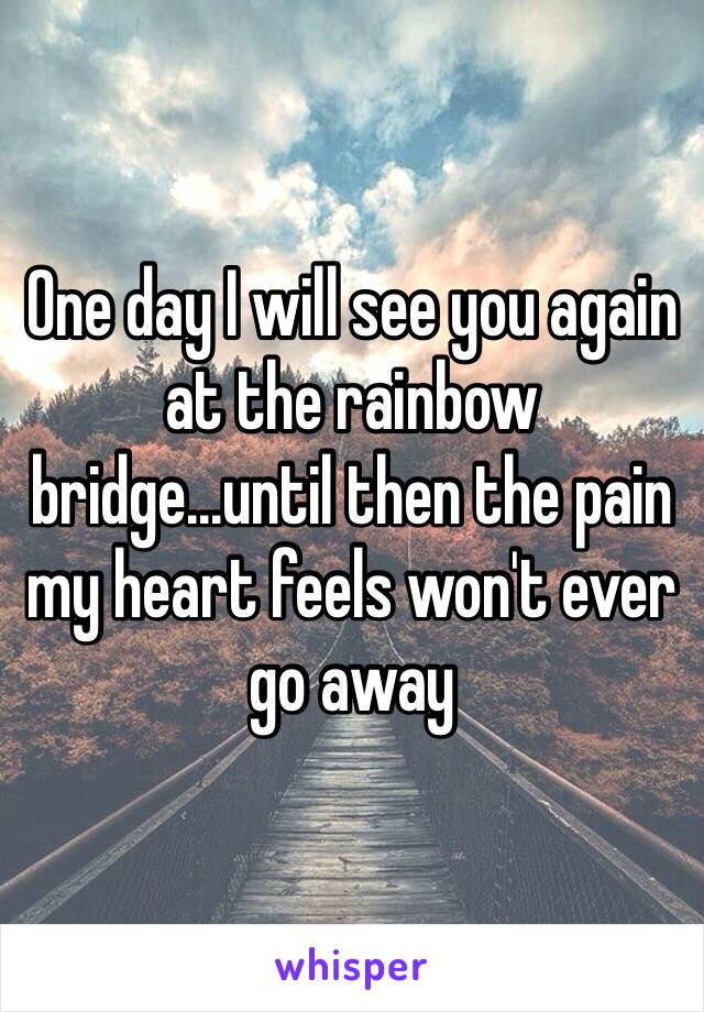 One day I will see you again at the rainbow bridge...until then the pain my heart feels won't ever go away