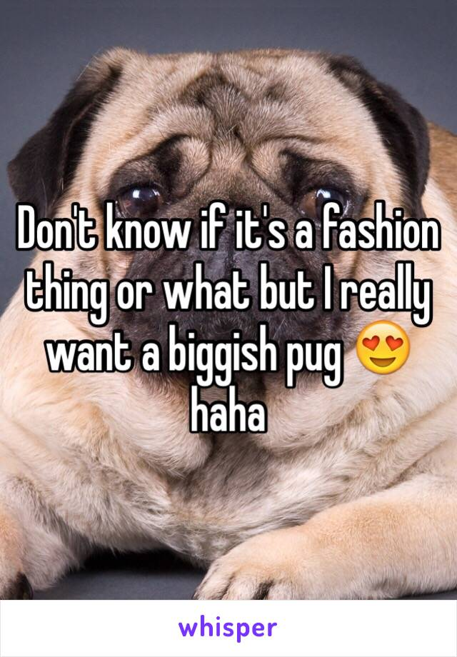 Don't know if it's a fashion thing or what but I really want a biggish pug 😍 haha