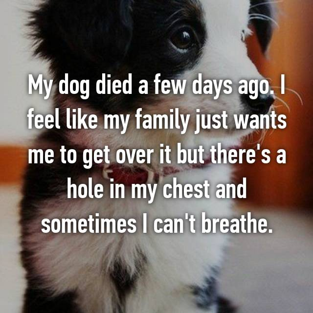 My dog died a few days ago. I feel like my family just wants me to get over it but there's a hole in my chest and sometimes I can't breathe.