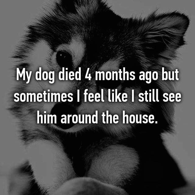 My dog died 4 months ago but sometimes I feel like I still see him around the house.