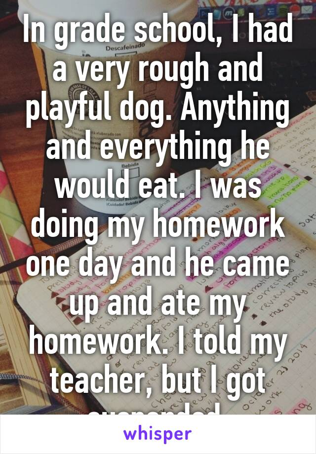 In grade school, I had a very rough and playful dog. Anything and everything he would eat. I was doing my homework one day and he came up and ate my homework. I told my teacher, but I got suspended.