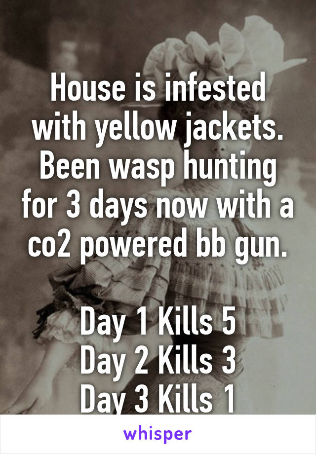 House is infested with yellow jackets. Been wasp hunting for 3 days now with a co2 powered bb gun.  Day 1 Kills 5 Day 2 Kills 3 Day 3 Kills 1