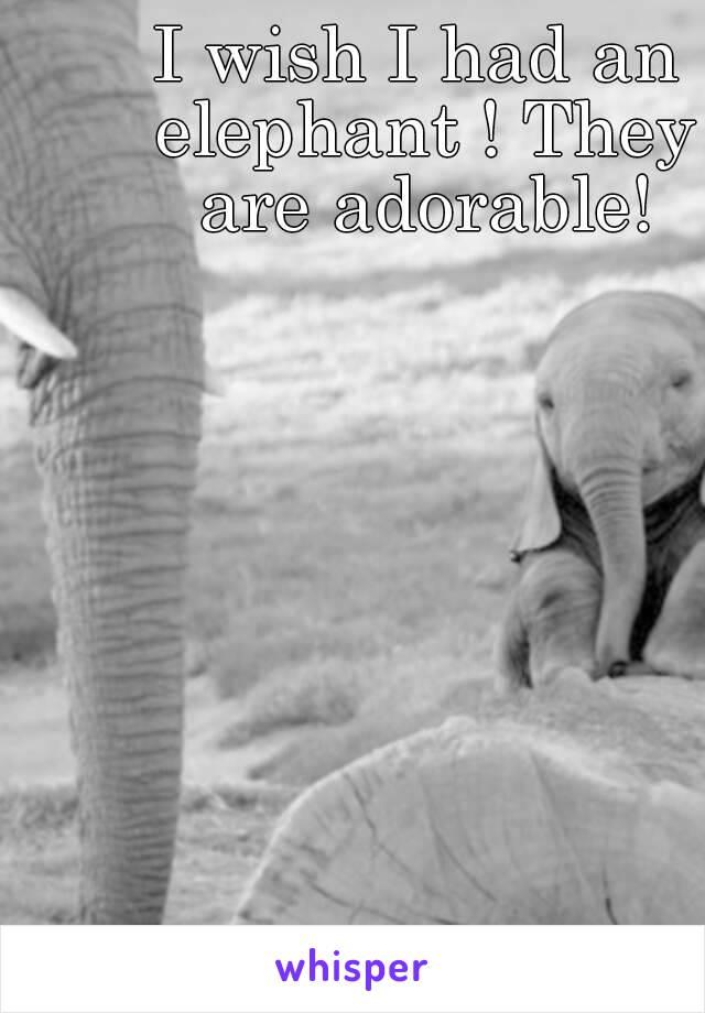 I wish I had an elephant ! They are adorable!
