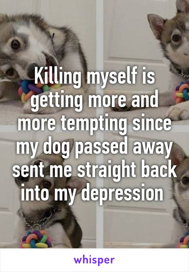 Killing myself is getting more and more tempting since my dog passed away sent me straight back into my depression