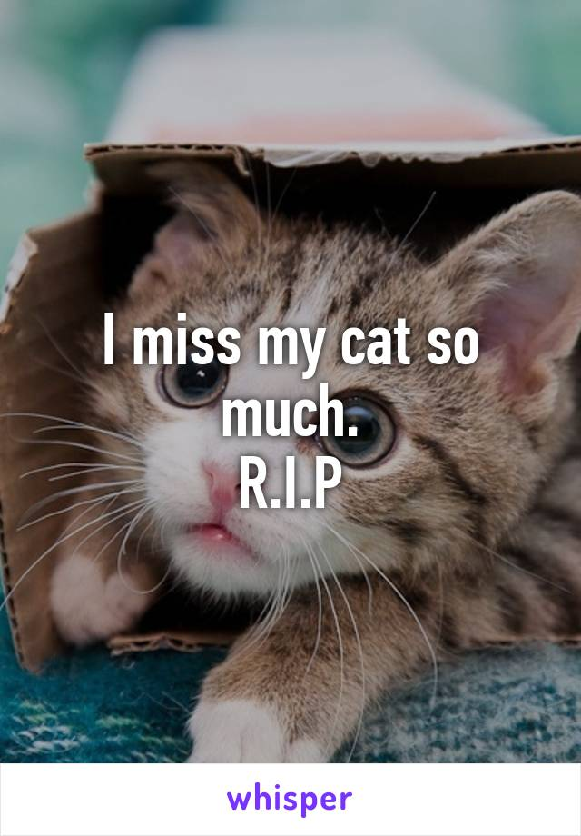 I miss my cat so much. R.I.P