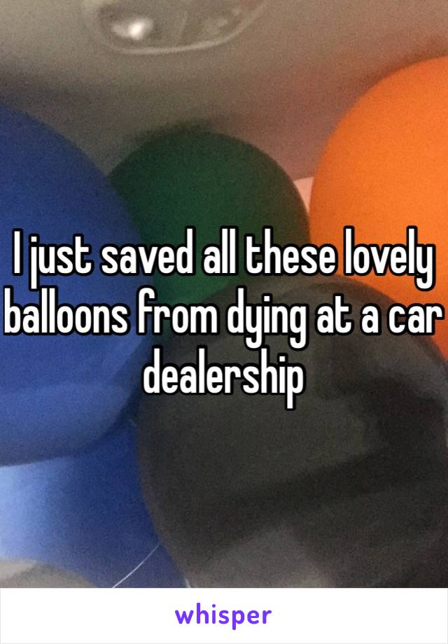 I just saved all these lovely balloons from dying at a car dealership