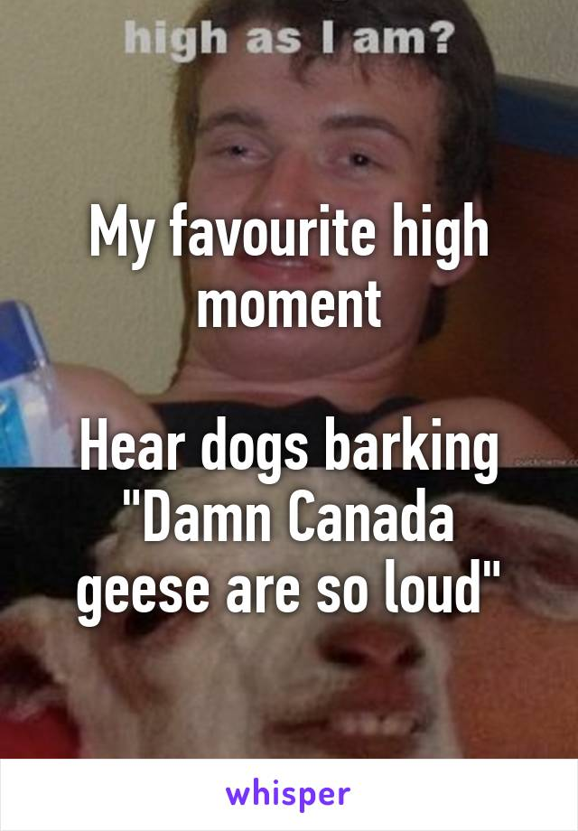 """My favourite high moment  Hear dogs barking """"Damn Canada geese are so loud"""""""