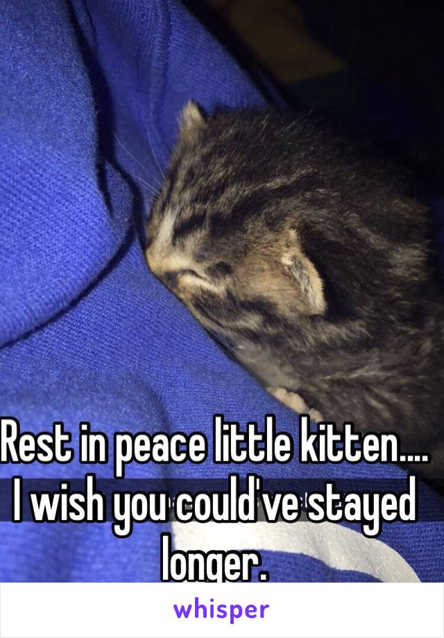 Rest in peace little kitten.... I wish you could've stayed longer.