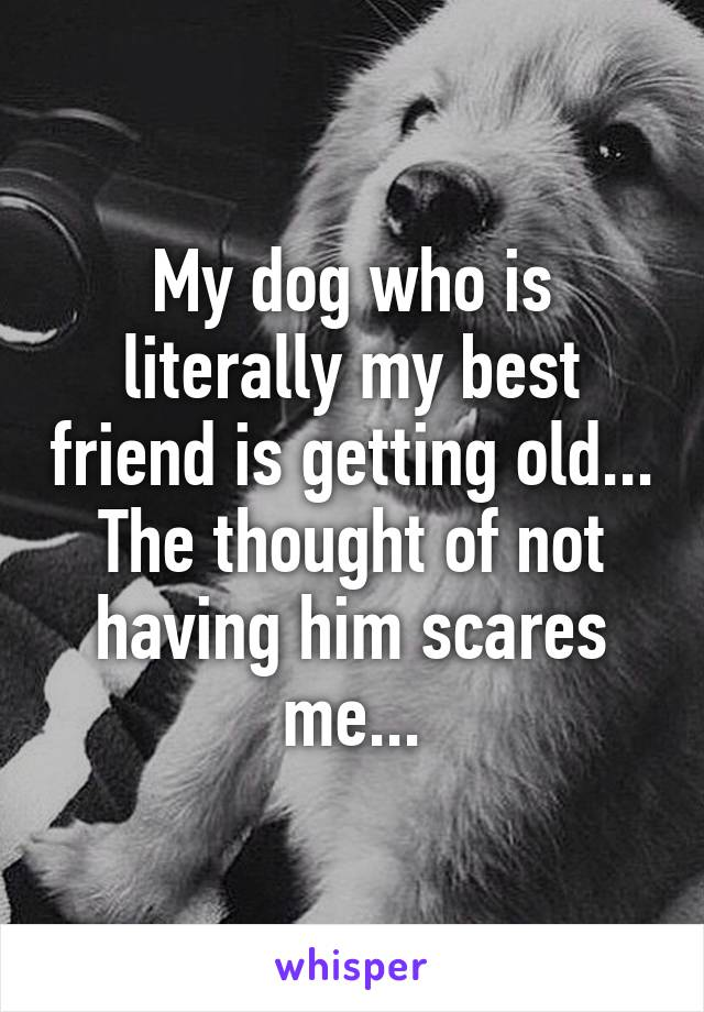 My dog who is literally my best friend is getting old... The thought of not having him scares me...