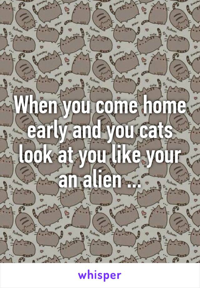 When you come home early and you cats look at you like your an alien ...