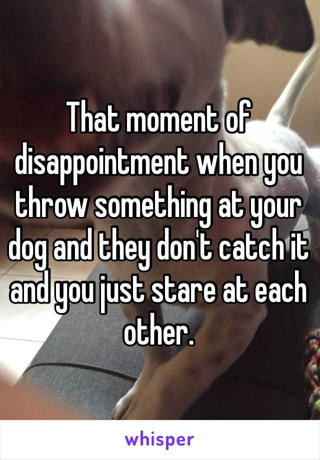 That moment of disappointment when you throw something at your dog and they don't catch it and you just stare at each other.
