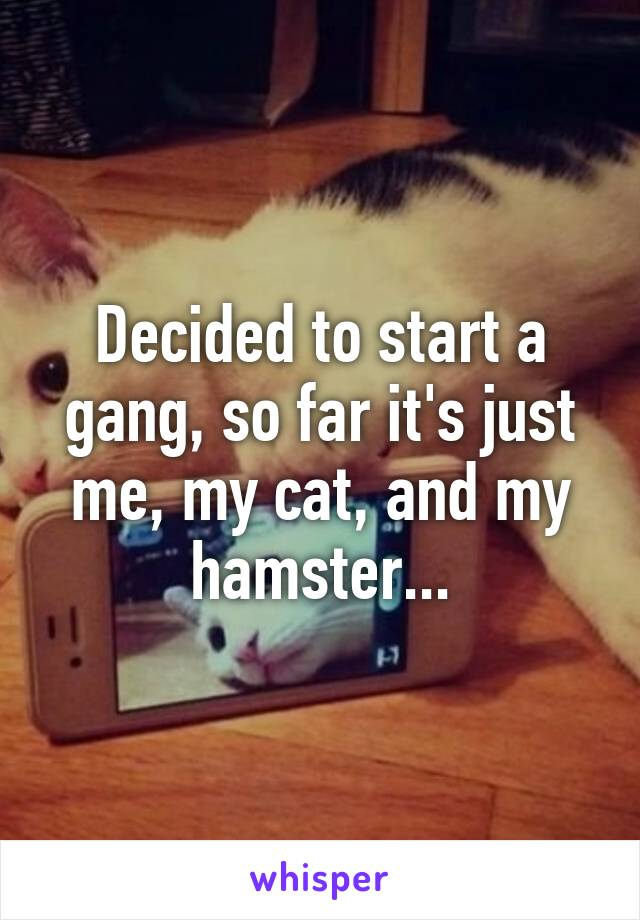 Decided to start a gang, so far it's just me, my cat, and my hamster...
