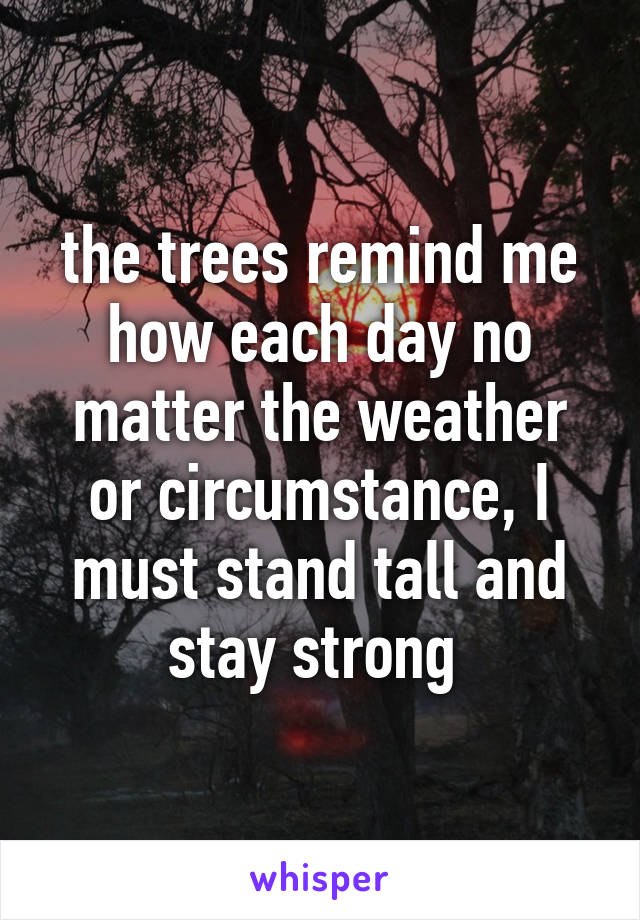 the trees remind me how each day no matter the weather or circumstance, I must stand tall and stay strong