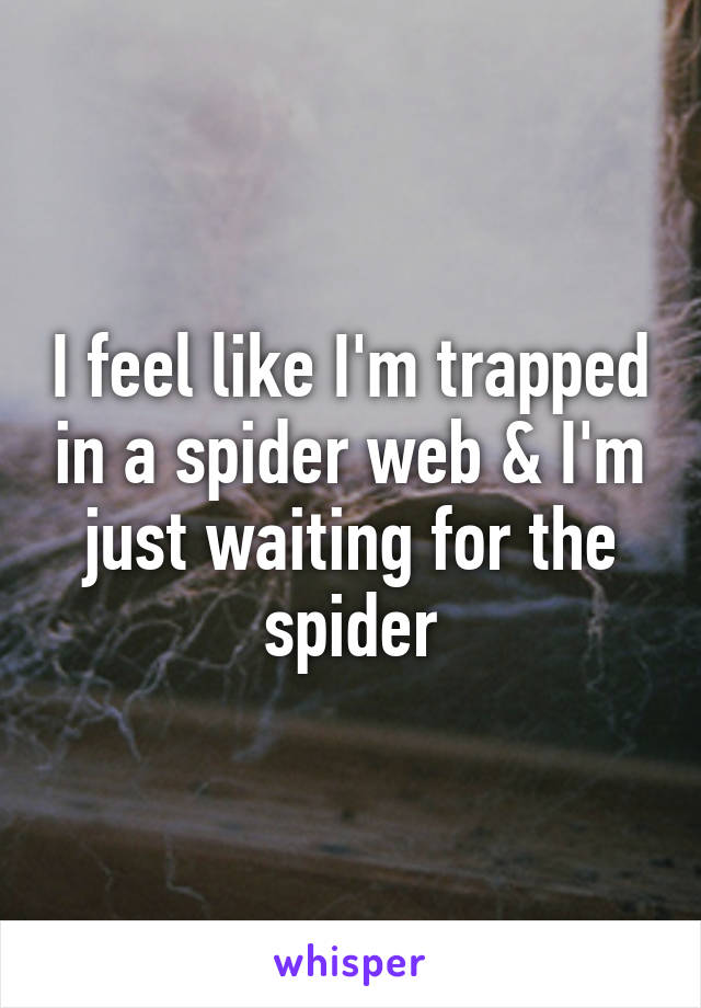 I feel like I'm trapped in a spider web & I'm just waiting for the spider
