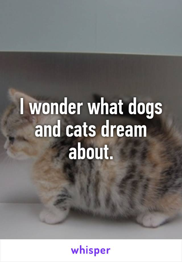 I wonder what dogs and cats dream about.