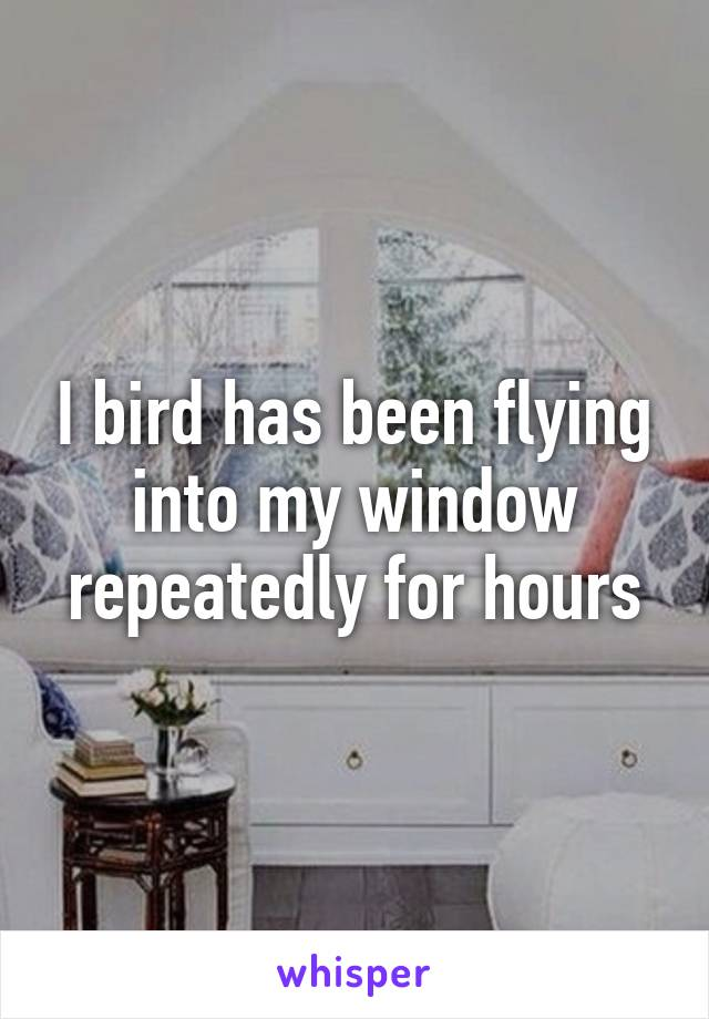 I bird has been flying into my window repeatedly for hours