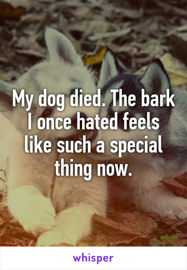My dog died. The bark I once hated feels like such a special thing now.