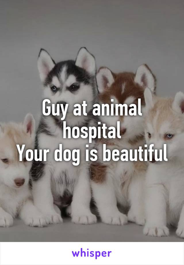 Guy at animal hospital Your dog is beautiful