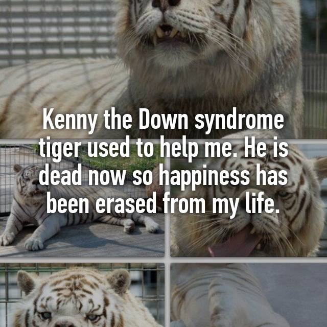 Image of: Kenny The Down Syndrome Tiger Used To Help Me He Is Dead Now So Happiness Has Been Erased From My Life Piper Lou Collection Kenny The Down Syndrome Tiger Used To Help Me He Is Dead Now So