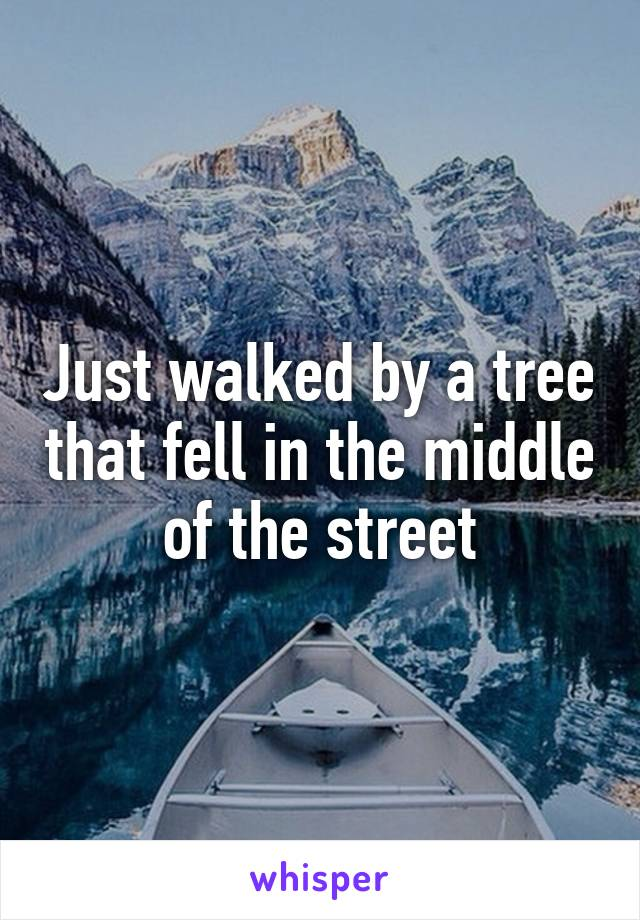 Just walked by a tree that fell in the middle of the street