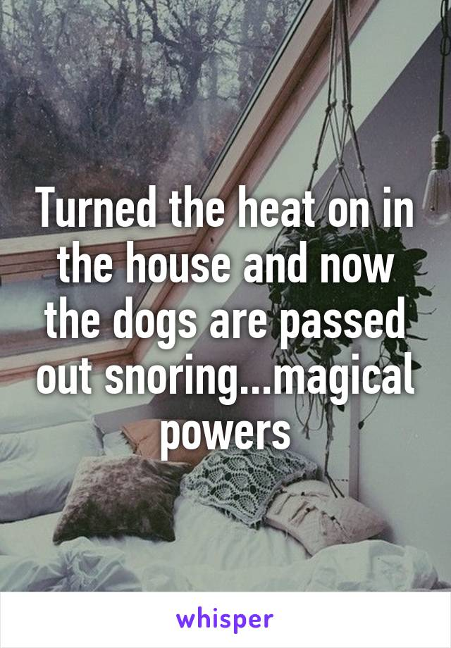 Turned the heat on in the house and now the dogs are passed out snoring...magical powers
