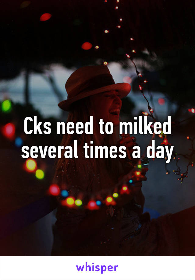 Cks need to milked several times a day