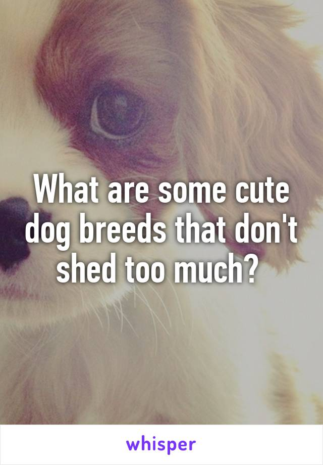What are some cute dog breeds that don't shed too much?