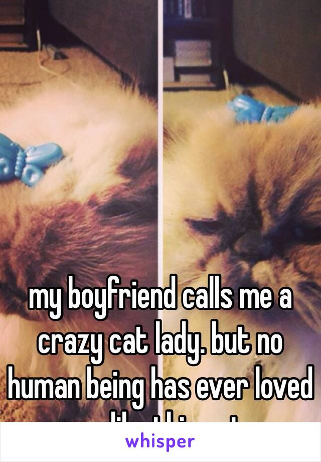 my boyfriend calls me a crazy cat lady. but no human being has ever loved me like this cat.
