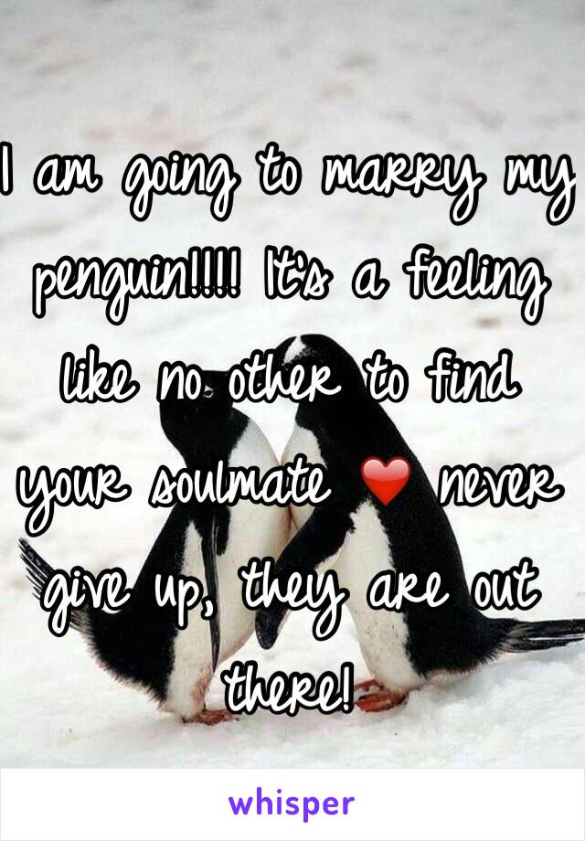 I am going to marry my penguin!!!! It's a feeling like no other to find your soulmate ❤️ never give up, they are out there!