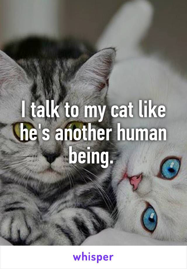 I talk to my cat like he's another human being.