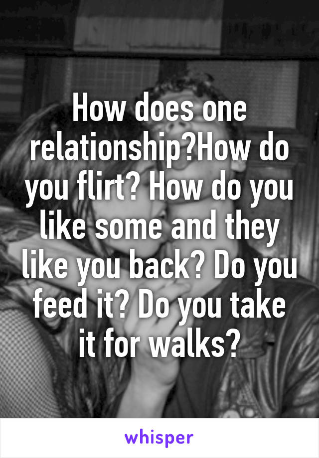 How does one relationship?How do you flirt? How do you like some and they like you back? Do you feed it? Do you take it for walks?