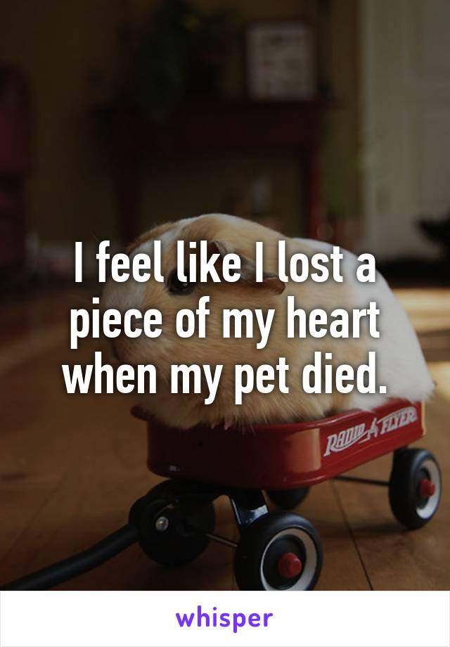 I feel like I lost a piece of my heart when my pet died.
