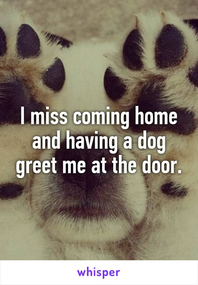 I miss coming home and having a dog greet me at the door.