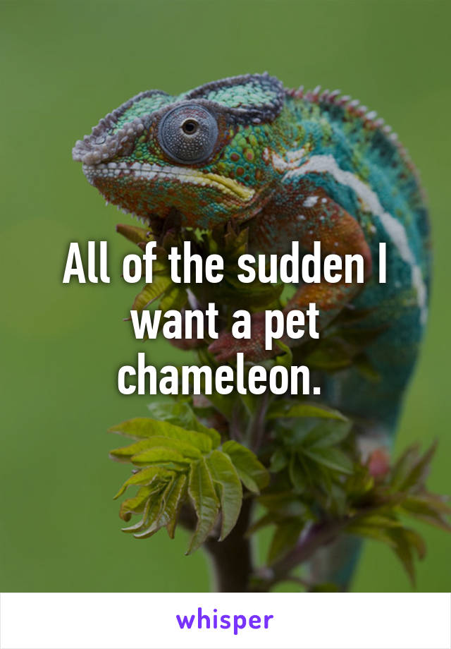 All of the sudden I want a pet chameleon.