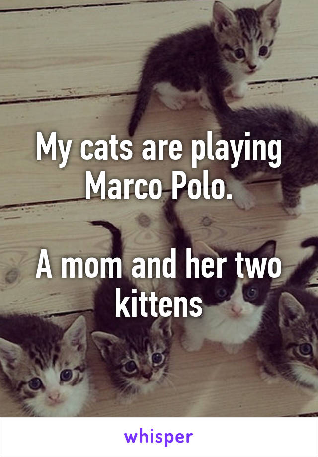 My cats are playing Marco Polo.  A mom and her two kittens