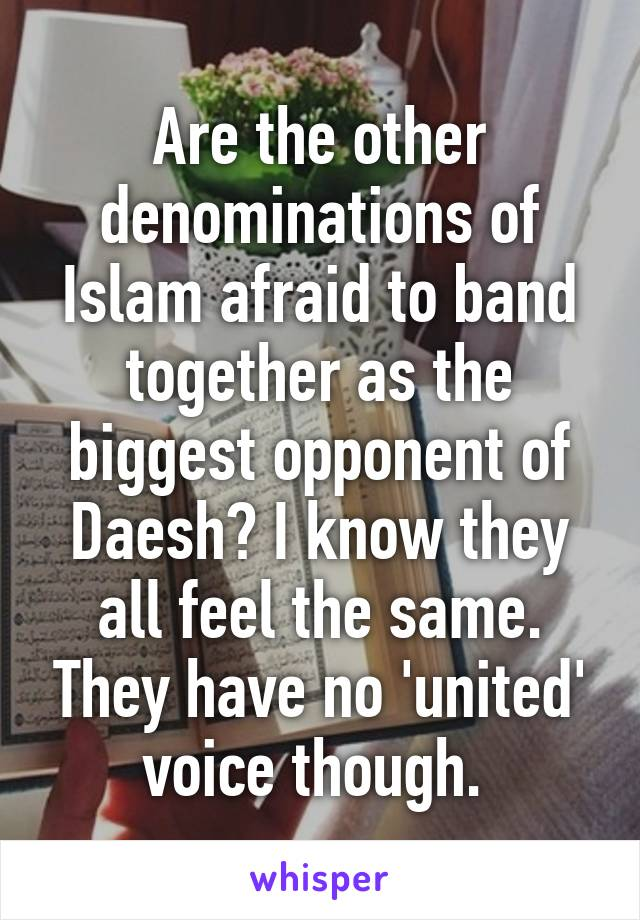 Are the other denominations of Islam afraid to band together as the biggest opponent of Daesh? I know they all feel the same. They have no 'united' voice though.