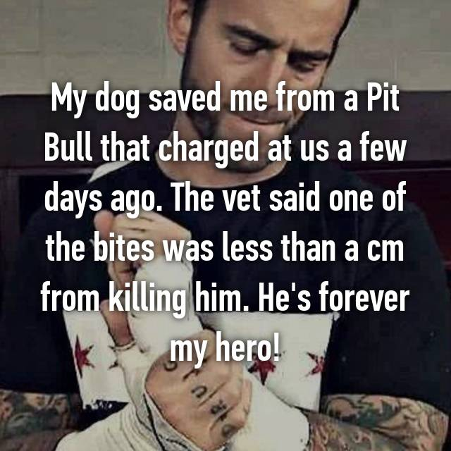 My dog saved me from a Pit Bull that charged at us a few days ago. The vet said one of the bites was less than a cm from killing him. He's forever my hero!