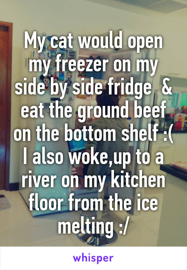 My cat would open my freezer on my side by side fridge & eat the ground