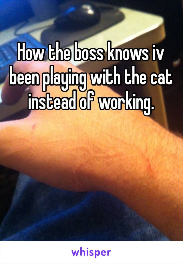 How the boss knows iv been playing with the cat instead of working.