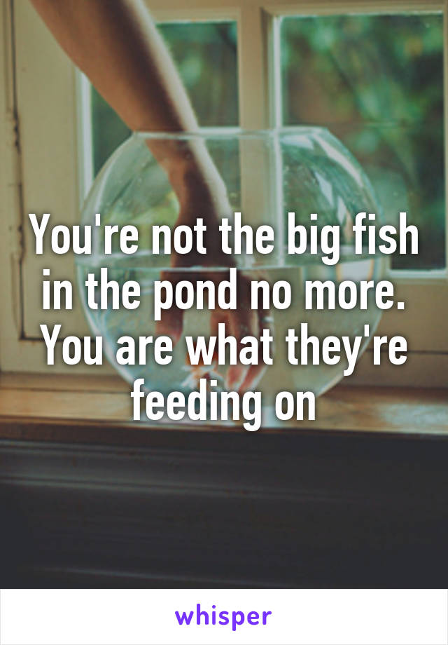 You're not the big fish in the pond no more. You are what they're feeding on
