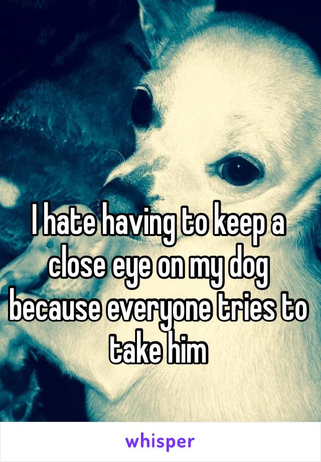 I hate having to keep a close eye on my dog because everyone tries to take him