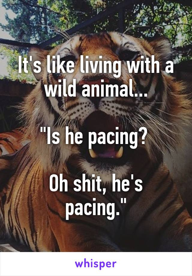 """It's like living with a wild animal...  """"Is he pacing?   Oh shit, he's pacing."""""""