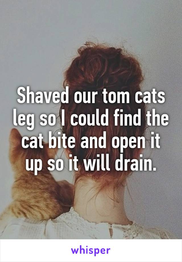 Shaved our tom cats leg so I could find the cat bite and open it up so it will drain.