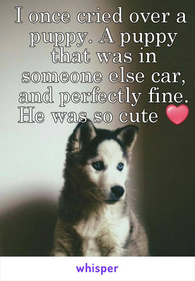 I once cried over a puppy. A puppy that was in someone else car, and perfectly fine. He was so cute ❤