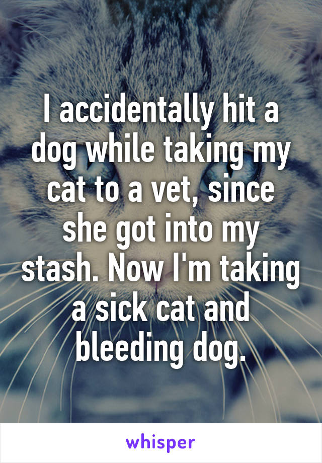I accidentally hit a dog while taking my cat to a vet, since she got into my stash. Now I'm taking a sick cat and bleeding dog.