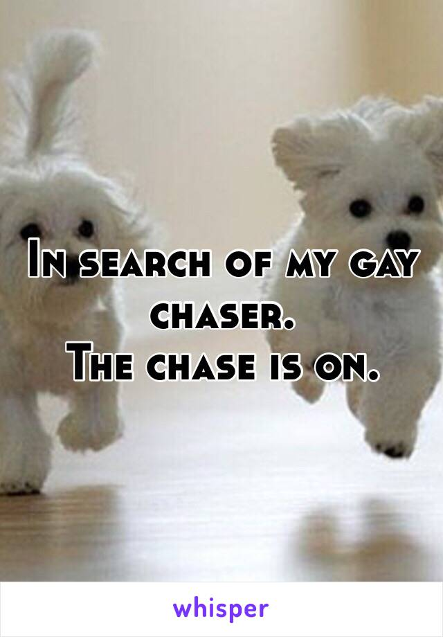 In search of my gay chaser.  The chase is on.