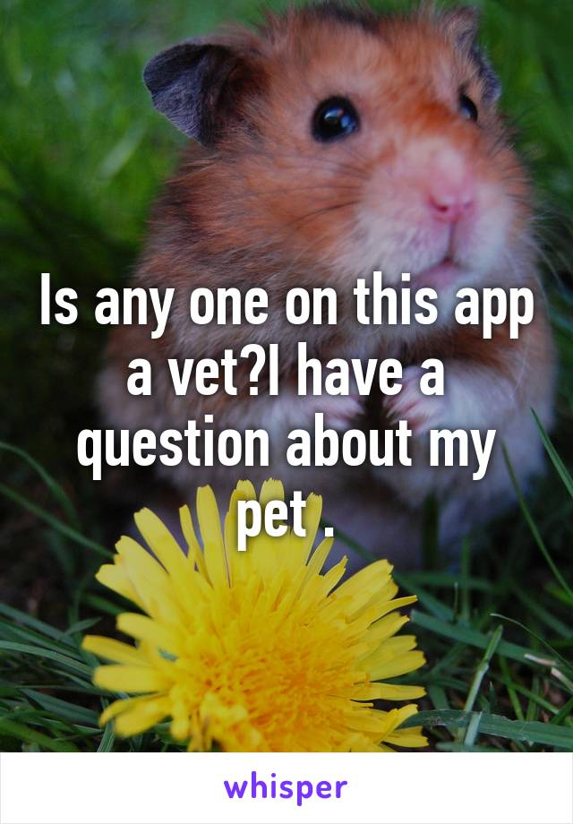 Is any one on this app a vet?I have a question about my pet .